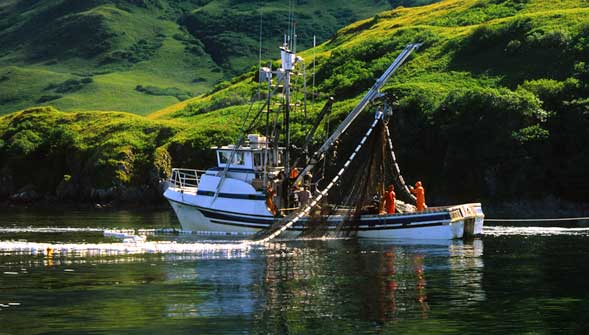 Alaska Salmon Purse Seiner Pulling in Nets